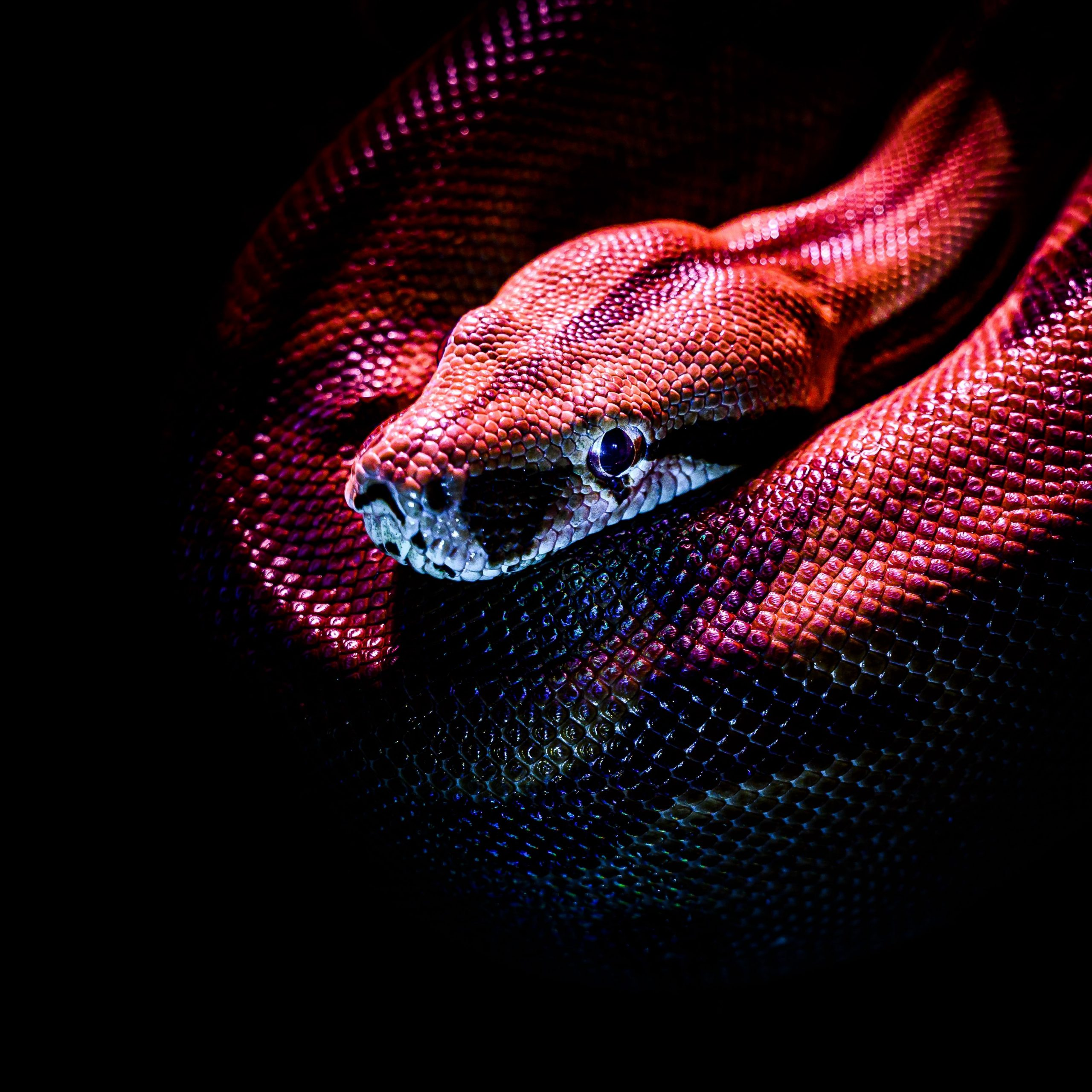 Collection Of Unique Animal 4K Mobile Wallpaper Download For Free