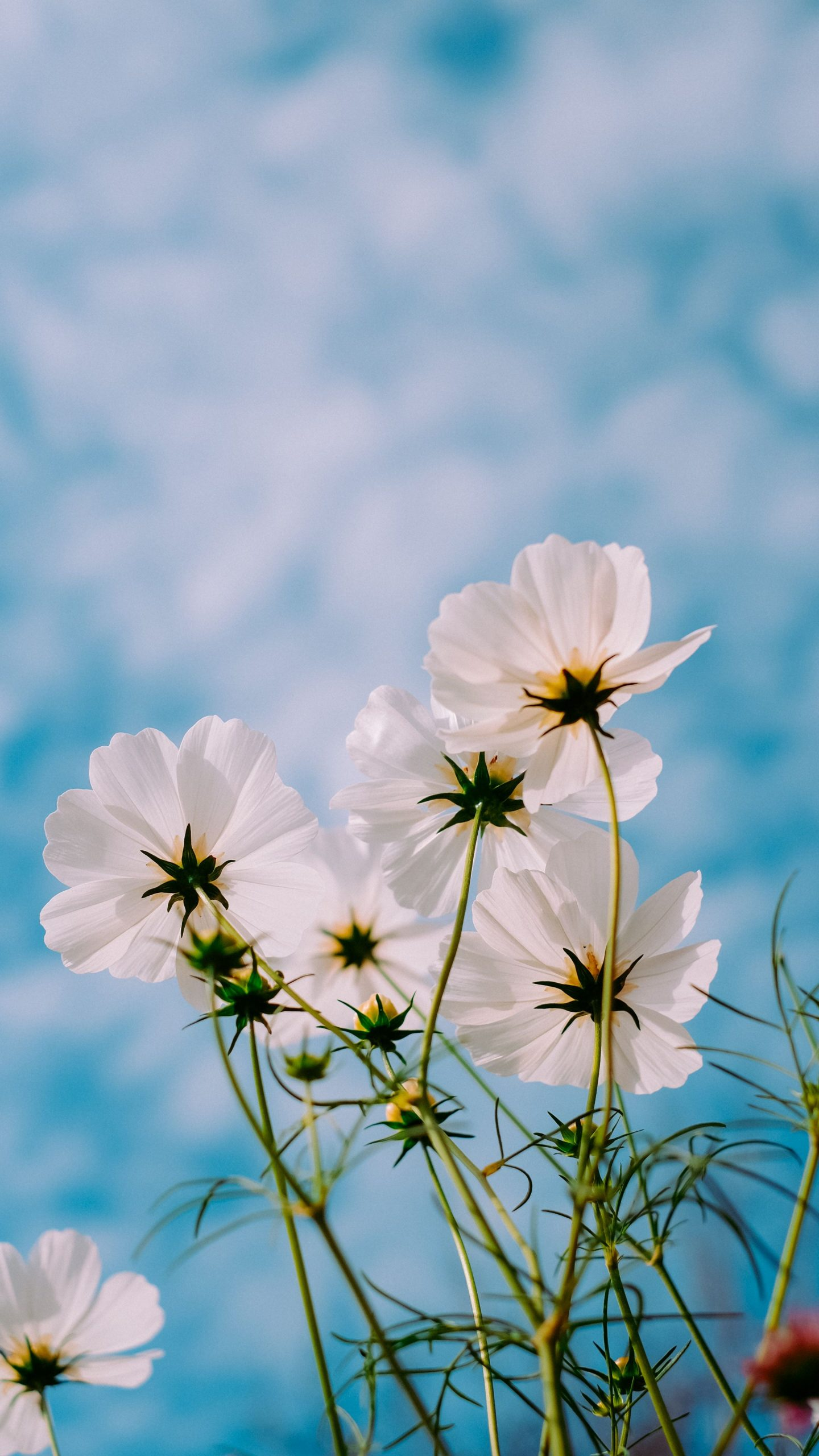 Surprise With 4K Flower Wallpaper For Mobile Android Free Download