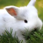 Cute Bunny Wallpaper Phone Full HD Free Download