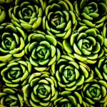 Beautiful Succulent Iphone Wallpaper Full HD Free Download