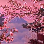 Cherry Blossom Phone Wallpaper Full HD For Free Download
