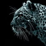 The Coolest Black Cheetah Wallpaper For You