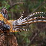 Our Planet Birds Of Paradise - Birds N Paradise The Most Beautiful For Phones